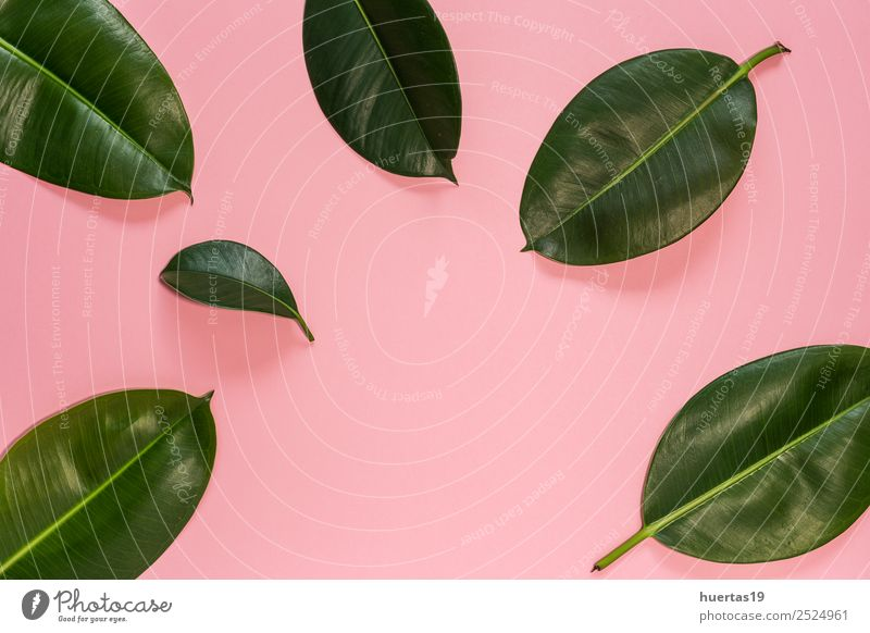 Leaf of tropical plant Nature Plant Green Tree Forest Lifestyle Natural Style Garden Elegant Exotic Virgin forest Palm tree Horizontal Consistency