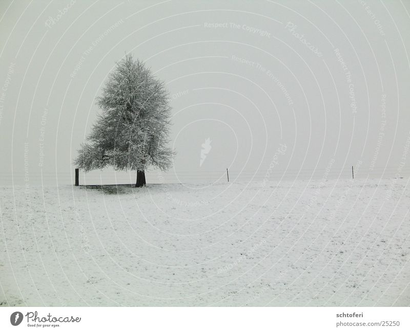 lonesome winter tree Tree Snow Gray Cold Loneliness Freeze Fog Winter Ice Frost Landscape