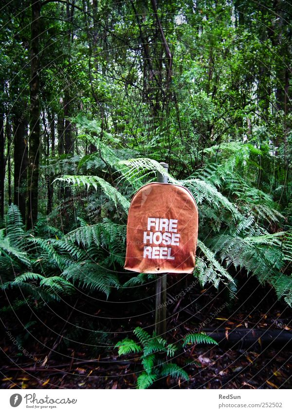 mere precaution Fire hydrant Hose Nature Plant Tree Bushes Fern Exotic Virgin forest Dark Green Red Erase Foresight Colour photo Multicoloured Exterior shot