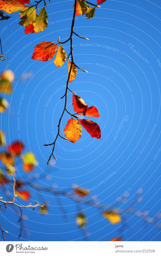 Sky Nature Tree Plant Leaf Environment Autumn Beautiful weather Cloudless sky