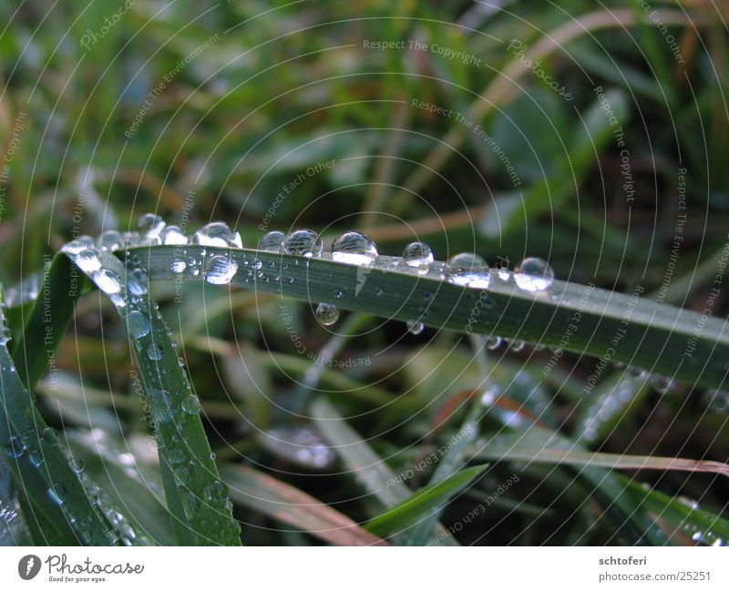 from bug's eyes Small Grass Fog Worm's-eye view Rain Drops of water Water Rope Detail beetle perspective