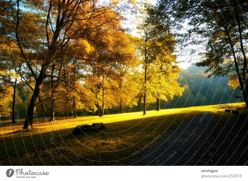 Nature Beautiful Tree Plant Sun Leaf Forest Yellow Autumn Environment Landscape Grass Lanes & trails Earth Park Orange