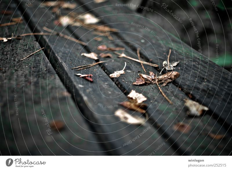 Nature Old Beautiful Plant Leaf Yellow Life Autumn Wood Gray Garden Park Time Lie Photography Wet