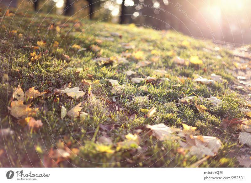 Autumn sun. Environment Nature Landscape Esthetic Autumn leaves Autumnal Early fall Autumnal colours Automn wood Autumnal weather Autumnal landscape Autumn wind