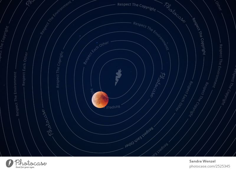 blood moon Nature Sky Cloudless sky Night sky Moon Lunar eclipse Full  moon Summer Beautiful weather Discover Looking Fantastic Orange Red Experiencing nature