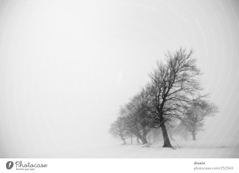 Nature Tree Plant Winter Cold Environment Landscape Ice Fog Natural Frost Branch Tree trunk Bad weather Schauinsland