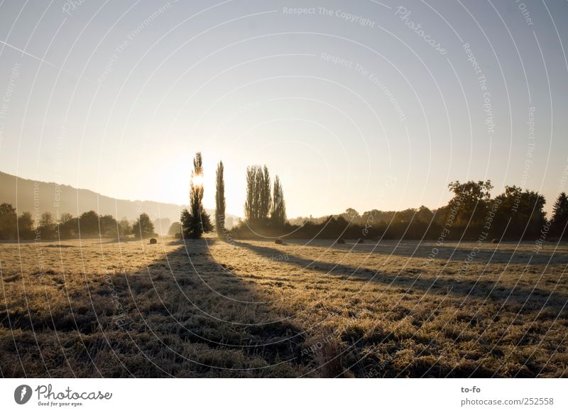 morning sun Nature Landscape Cloudless sky Sunrise Sunset Sunlight Autumn Beautiful weather Tree Bushes Meadow Field Moody Calm Air Cold Loneliness Colour photo