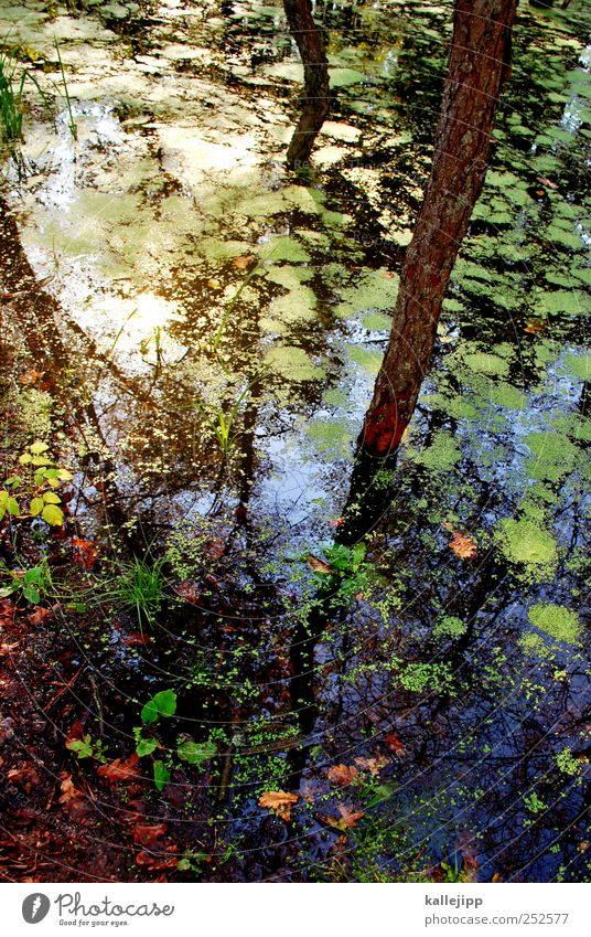 Nature Water Tree Plant Summer Animal Forest Autumn Environment Landscape Lake Weather Climate Lakeside Bay Tree trunk