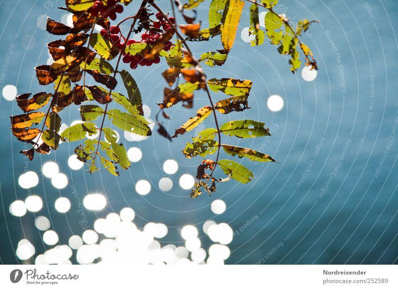 Nature Water Blue Plant Calm Colour Autumn Lake Glittering Change Elements Transience Lakeside Berries Autumn leaves Senses