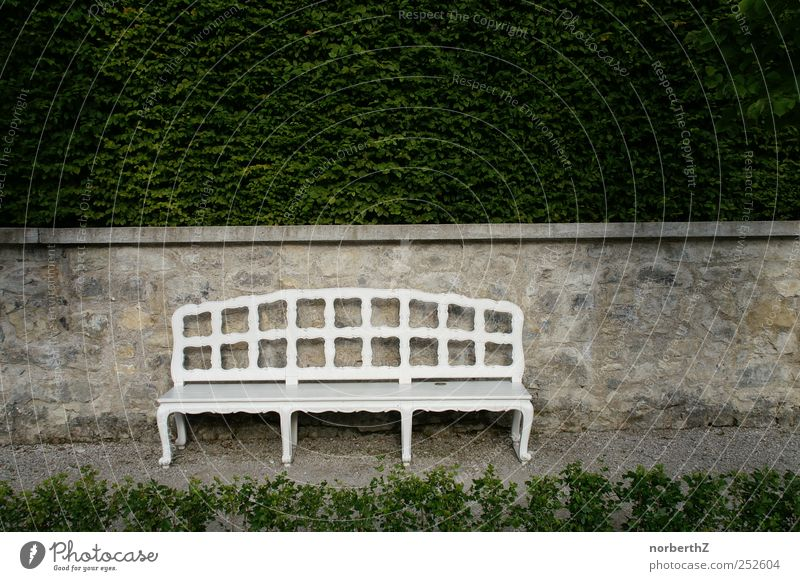 Bench with wall and hedge Garden Sculpture Nature Beautiful weather Plant Bushes Stone Calm Death Subdued colour Exterior shot Deserted Copy Space right Day