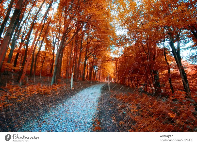 Nature Tree Red Plant Leaf Loneliness Forest Far-off places Relaxation Autumn Landscape Wood Lanes & trails Earth Park Time