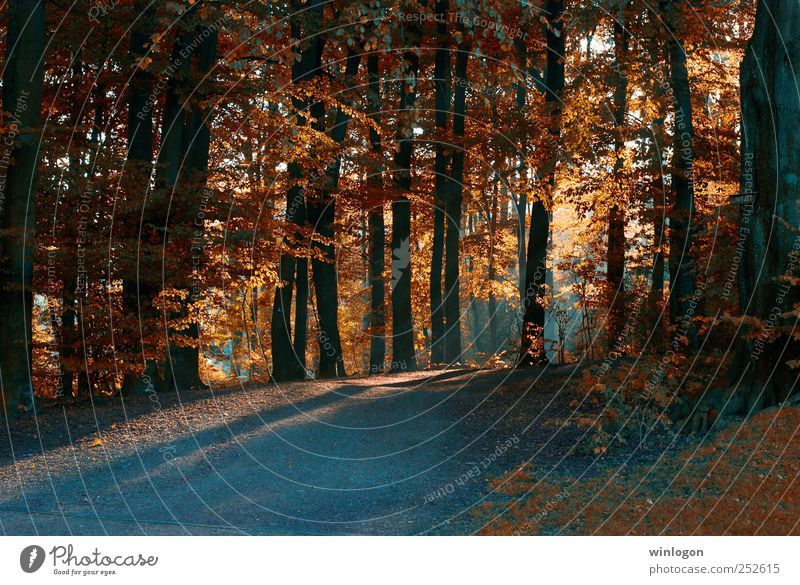 Nature Beautiful Tree Plant Red Sun Leaf Forest Autumn Landscape Lanes & trails Park Orange Germany Photography Hill