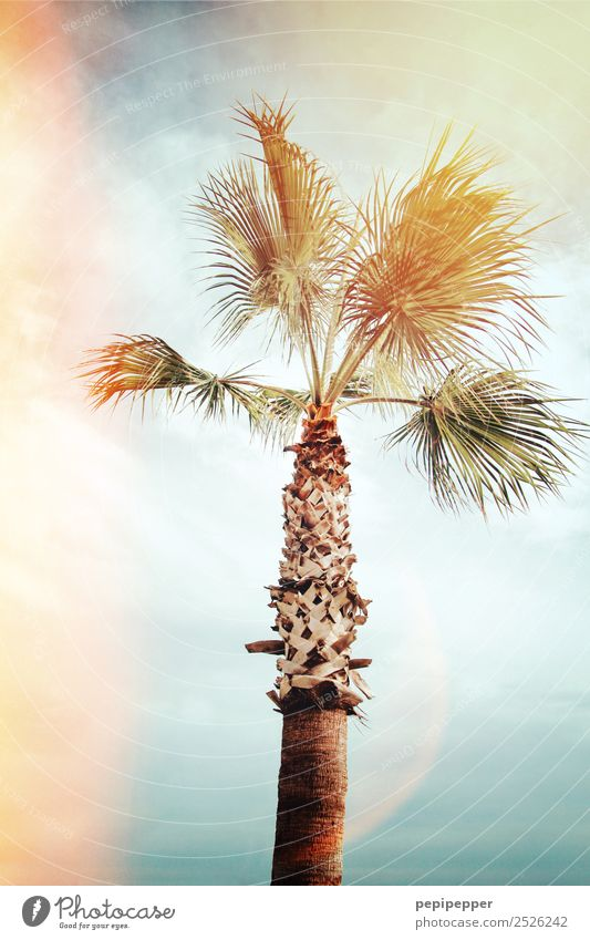 palm Vacation & Travel Tourism Trip Adventure Far-off places Summer Beach Ocean Nature Plant Sky Clouds Wind Tree Palm tree Coast Wood Movement Exotic Turquoise