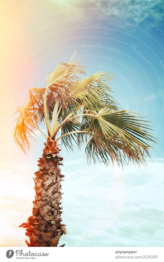 palm Vacation & Travel Tourism Trip Summer Summer vacation Environment Nature Plant Sky Sun Sunrise Sunset Beautiful weather Tree Coast Beach Ocean Island Wood