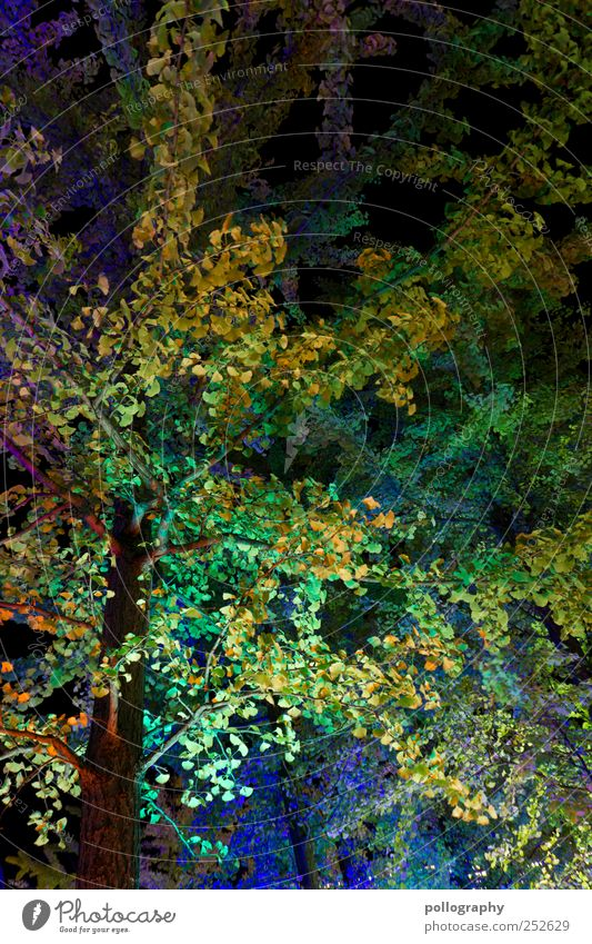 Nature Blue Green Tree Plant Leaf Autumn Berlin Landscape Park Lighting Illuminate Branch Blossoming Tree trunk Light show