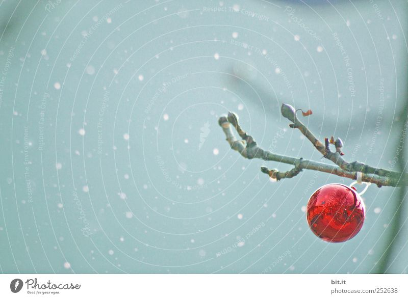 Sky Christmas & Advent Blue Tree Red Loneliness Calm Winter Snow Feasts & Celebrations Moody Snowfall Weather Decoration Glass Point