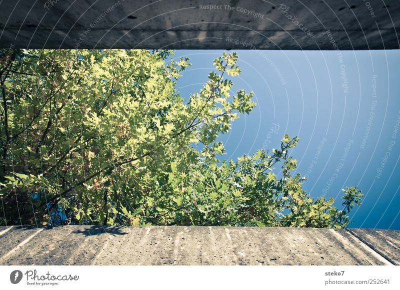 Blue Green Tree Plant Wall (building) Autumn Gray Wall (barrier) Beautiful weather Restrict