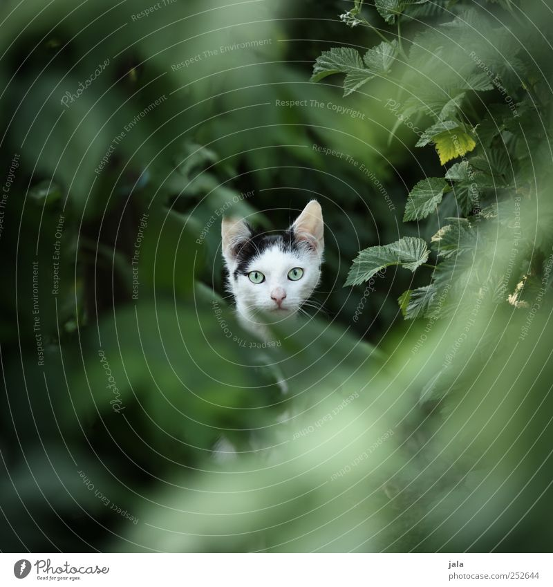 ^°°^ Environment Nature Plant Leaf Foliage plant Animal Pet Cat 1 Beautiful Colour photo Exterior shot Deserted Copy Space left Copy Space right