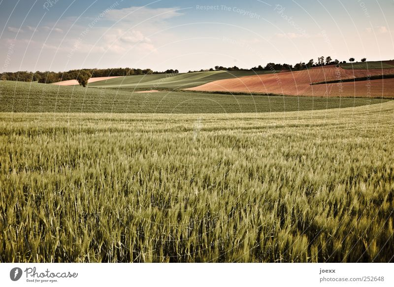 ...here it may be me. Agriculture Forestry Nature Landscape Sky Clouds Summer Beautiful weather Agricultural crop Field Large Blue Brown Green Calm Horizon