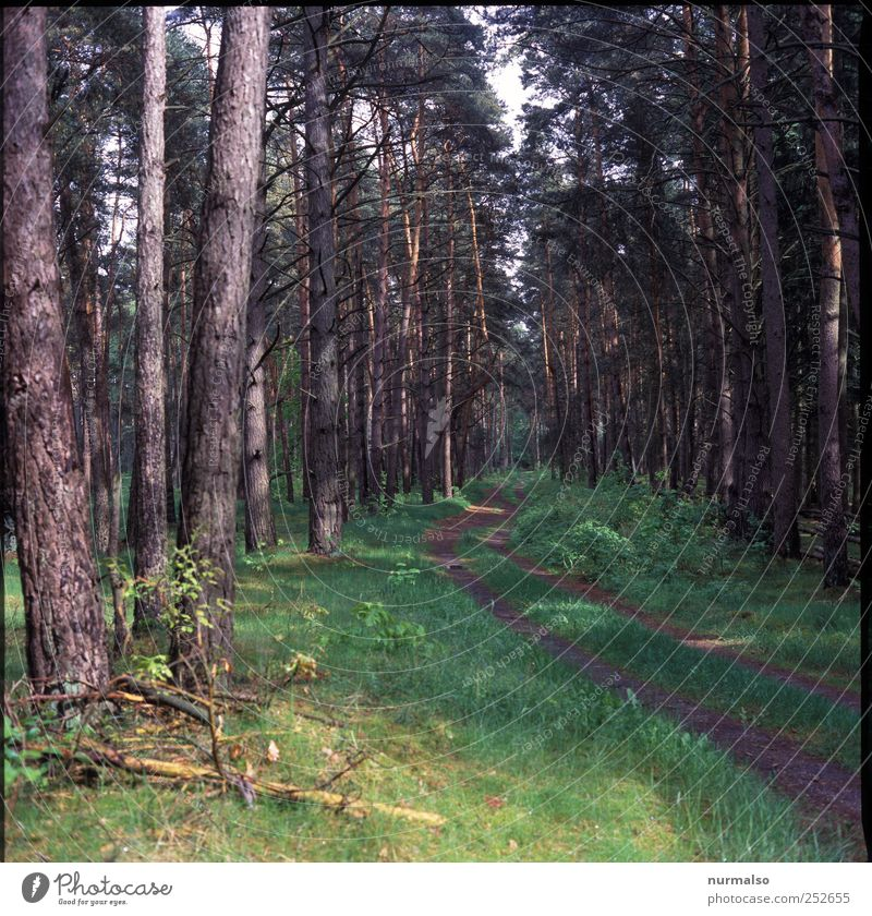 Little Red Riding Hood's Way Nature Plant Tree Forest Traffic infrastructure Lanes & trails Relaxation Natural Brown Green Spruce forest Coniferous forest