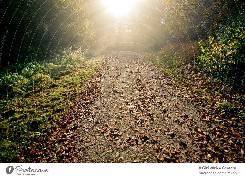 Nature Tree Plant Sun Leaf Forest Autumn Environment Landscape Grass Lanes & trails Fresh Wild Natural Bushes Illuminate