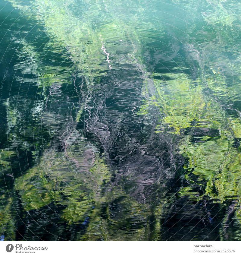 Zero eight fifteen | Water reflection Nature Elements Plant Forest River Line Dark Bright Wild Green Bizarre Art Environment Colour photo Exterior shot Detail