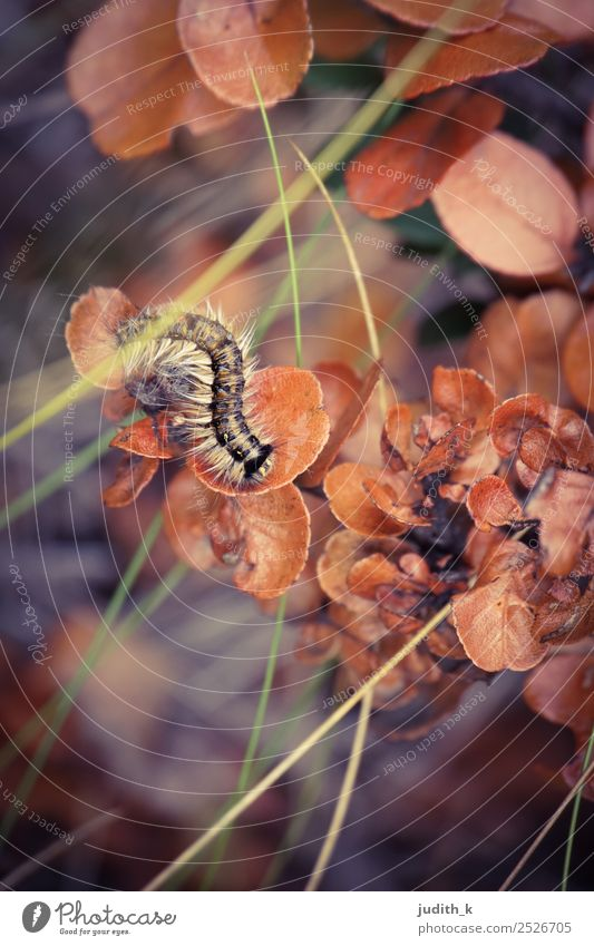 striped caterpillar in autumn Environment Nature Plant Animal Earth Autumn Grass Bushes Exotic Meadow Forest Wild animal Caterpillar 1 Movement Crawl Esthetic