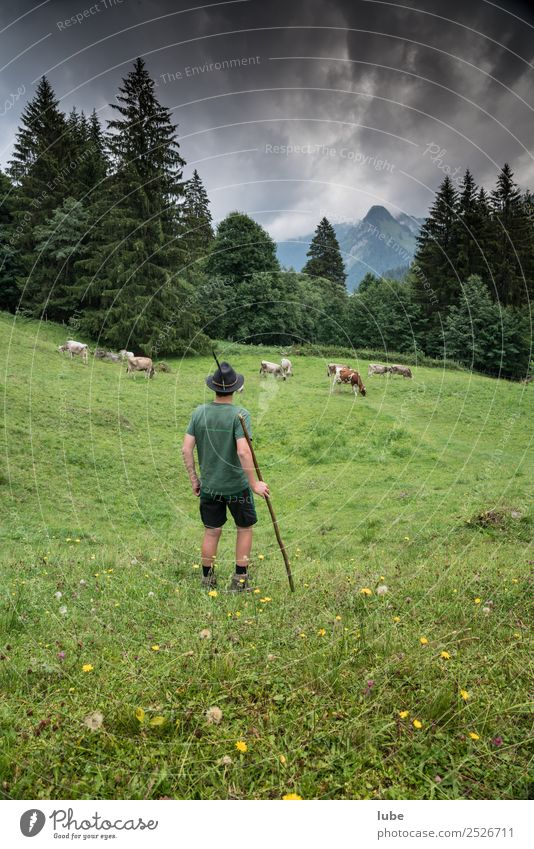 Nature Landscape Animal Mountain Environment Together Alps Agriculture Cow Testing & Control Climate change Bad weather Forestry Alpine pasture Herd Farm animal