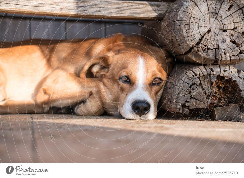 Dog Animal Contentment Break Sleep Serene Pet Fatigue Farm animal Resting place