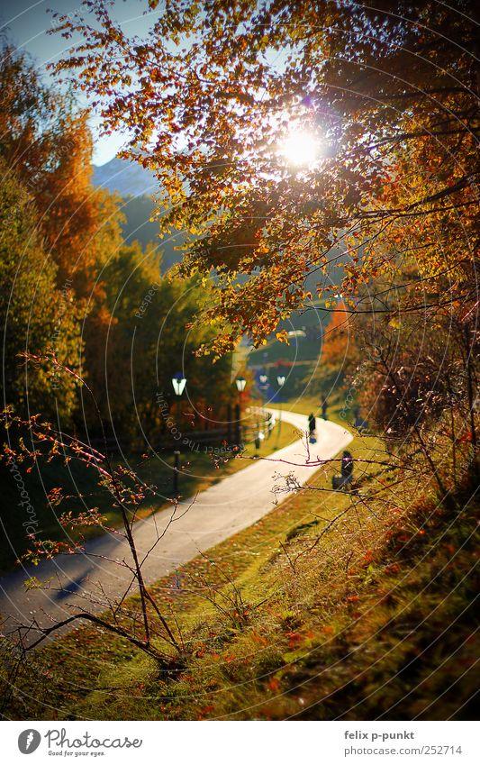 Falling Leaves Art Environment Nature Sunlight Autumn Beautiful weather Park Forest Mountain Snowcapped peak Lanes & trails Emotions Contentment