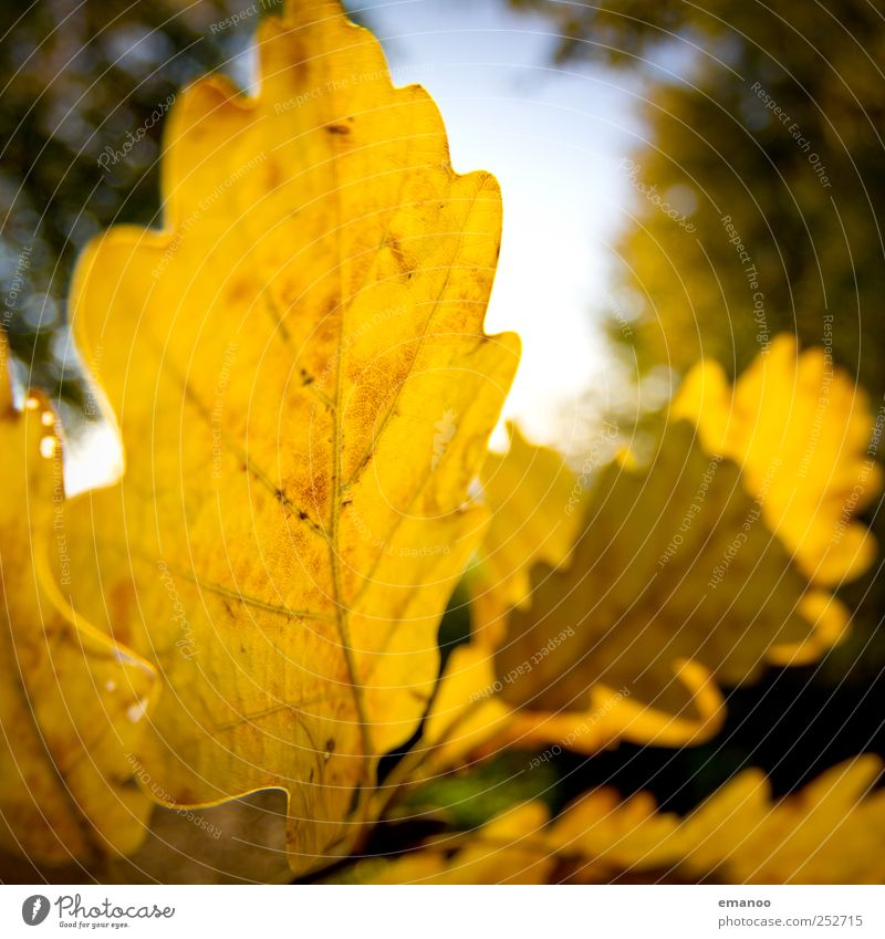 Sky Nature Old Tree Plant Sun Leaf Landscape Yellow Autumn Garden Weather Climate Natural Warm-heartedness Round