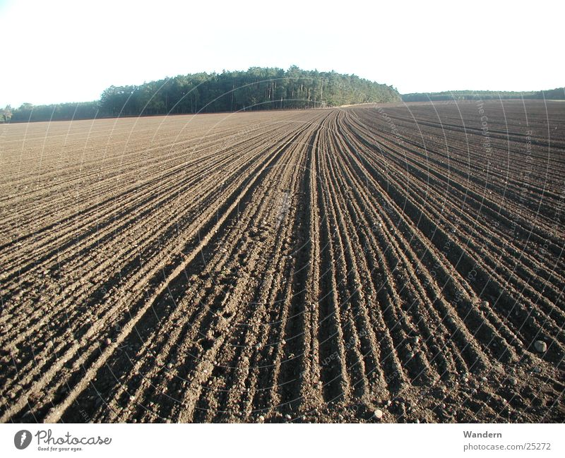 Nature Autumn Field Agriculture Saxony Plain Sow