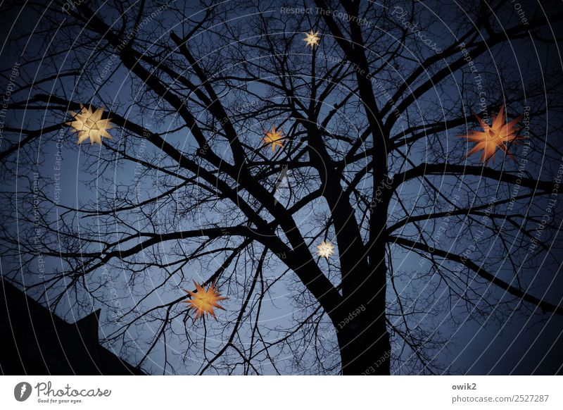 starry sky Cloudless sky Winter Tree Hang Illuminate Dark Above Christmas & Advent lordnhut stars Star (Symbol) Twigs and branches Festive Colour photo