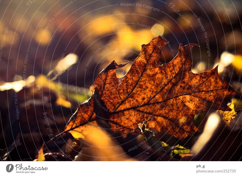 It's that time again Nature Beautiful Tree Plant Leaf Yellow Autumn Park Bright Brown Gold Esthetic Beautiful weather