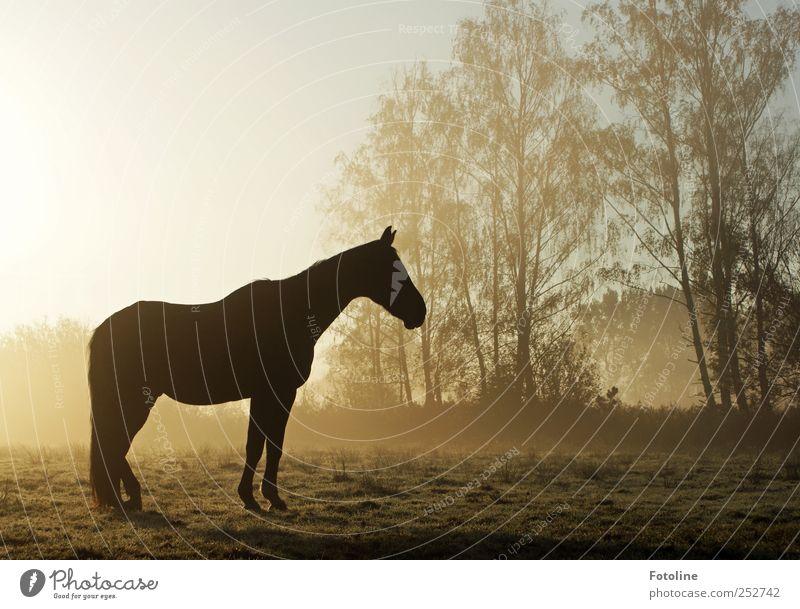 Sky Nature Tree Plant Animal Meadow Environment Landscape Grass Bright Field Wet Fog Natural Horse Pelt