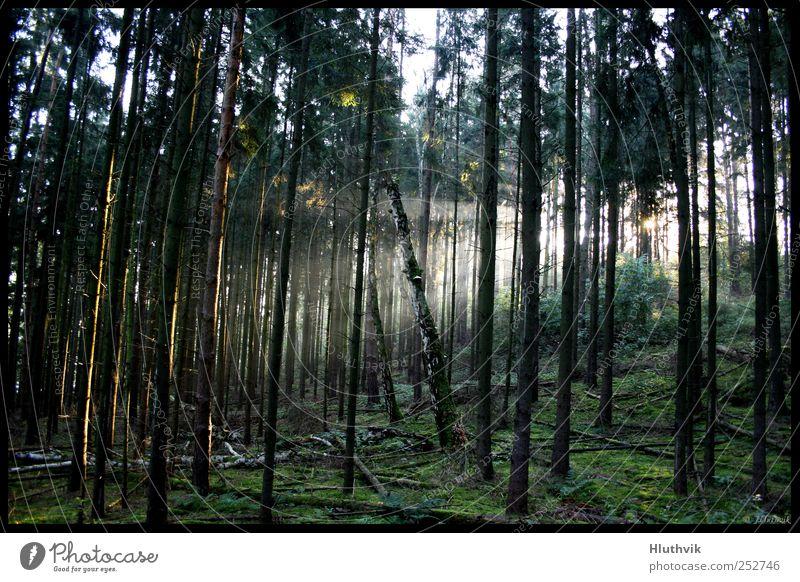 Nature Green Tree Plant Sun Calm Far-off places Forest Autumn Environment Landscape Dream Bright Glittering Fog Fresh