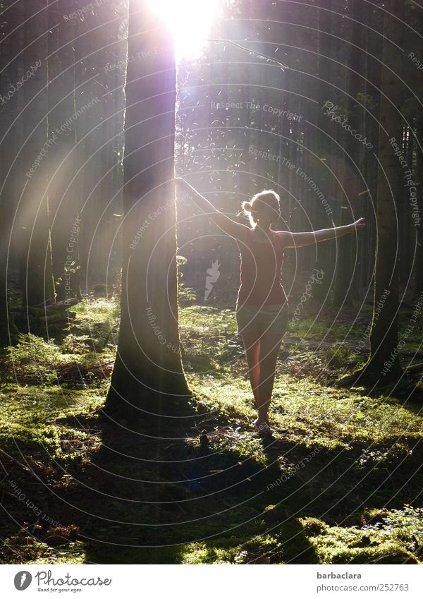 Catch sun dust Feminine Young woman Youth (Young adults) Woman Adults 1 Human being 18 - 30 years Nature Sunrise Sunset Sunlight Moss Forest Enchanted wood