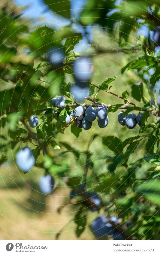 Healthy Eating Tree Natural Happy Food Garden Fruit Sweet Delicious Agriculture Violet Many Harvest Organic produce Tradition