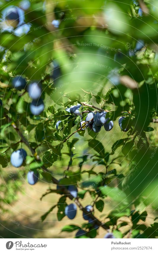 Healthy Eating Tree Natural Happy Food Garden Fruit Sweet Delicious Violet Many Harvest Organic produce Tradition Mature Vegetarian diet