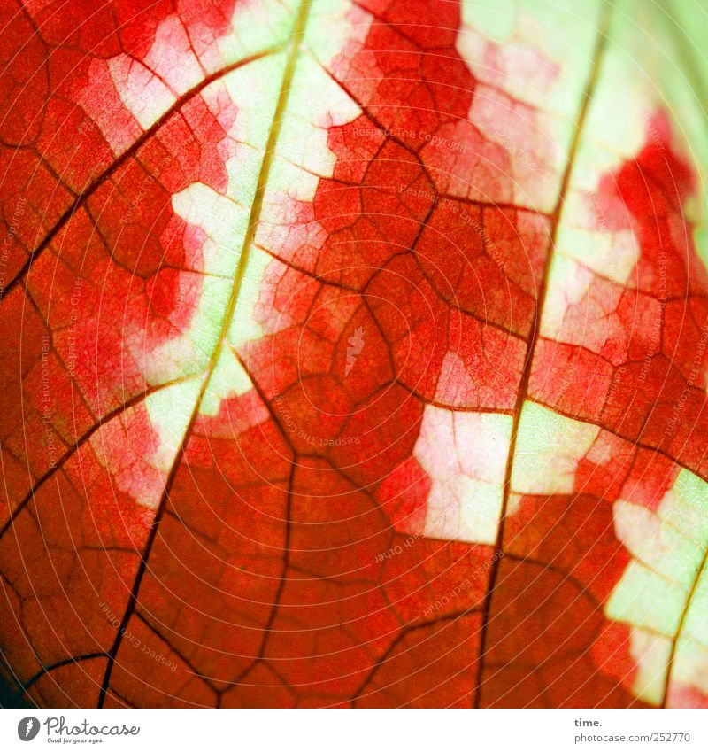 Green Red Leaf Yellow Life Autumn Death Change Illuminate Surface Glow Weathered Colouring Surface structure