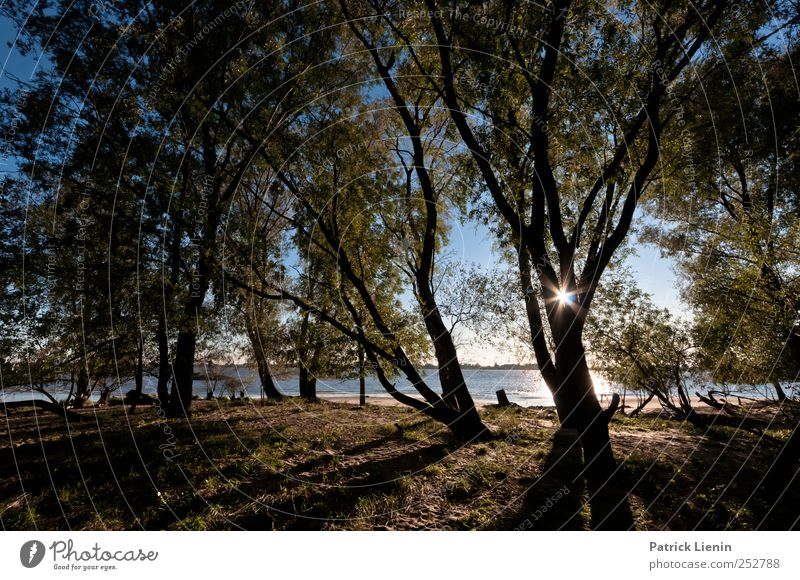 Nature Tree Plant Sun Beach Loneliness Forest Autumn Freedom Environment Landscape Coast Weather Trip Adventure Climate