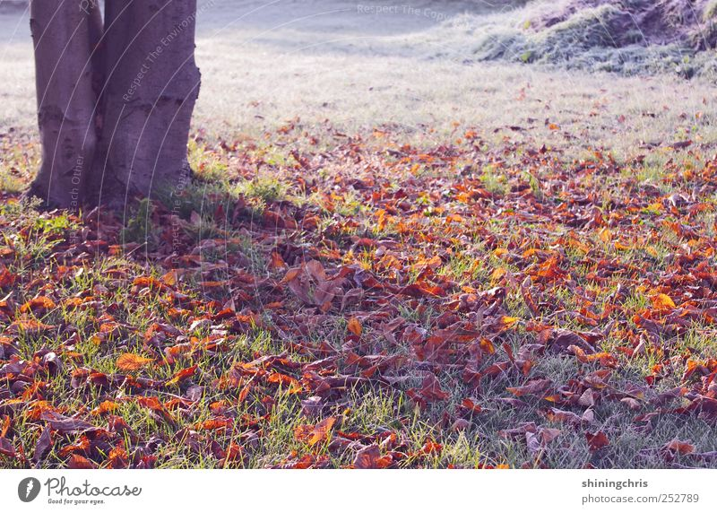 Nature Tree Landscape Loneliness Leaf Calm Winter Cold Environment Autumn Moody Park Glittering Ice Beginning Eternity