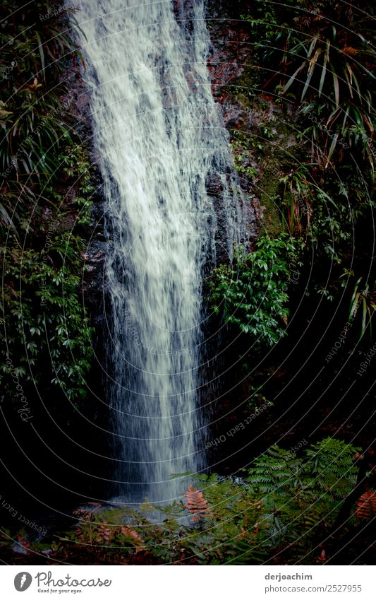 Zero eight fifteen / it runs and runs.... Environment Nature Plant Water Summer Beautiful weather Wild plant Virgin forest Australia Deserted Waterfall Observe