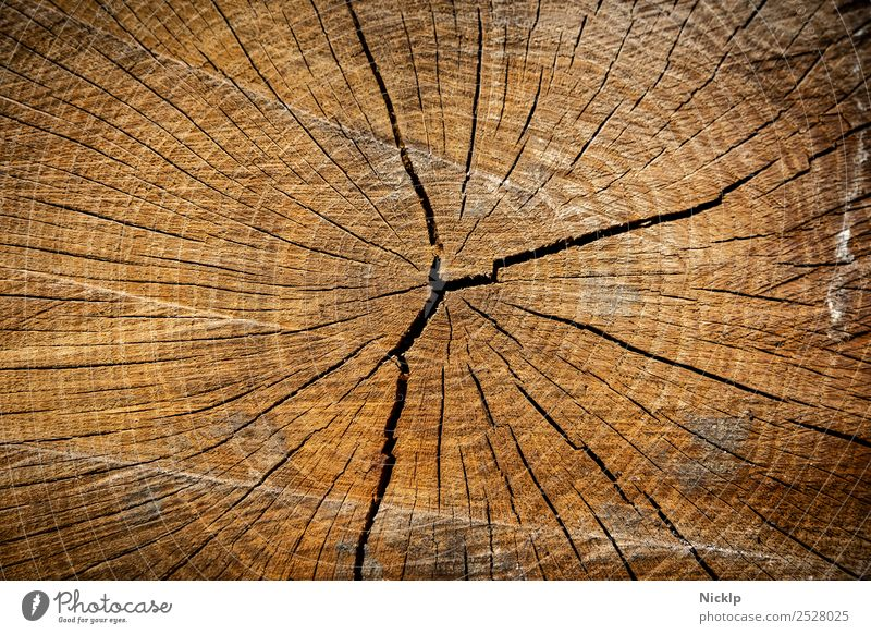 Cross-section through the wood of a tree trunk with annual rings and cracks (close-up) Nature Annual ring Tree trunk Forest Esthetic Sustainability natural