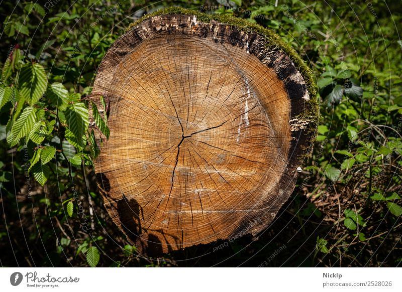 annual rings - forest - wood - tree trunk Nature Plant Spring Tree Bushes Moss Leaf Forest Esthetic Brown Green Moody Power Calm Eternity Idyll Climate