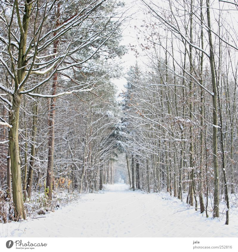 Sky Nature White Tree Plant Winter Black Forest Snow Environment Landscape Lanes & trails Brown Natural