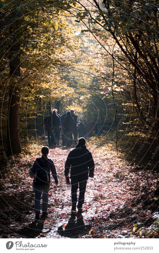 Autumn leaves Hiking Human being Masculine Friendship Life 2 Group Environment Nature Landscape Beautiful weather Tree Leaf Forest To enjoy Walking