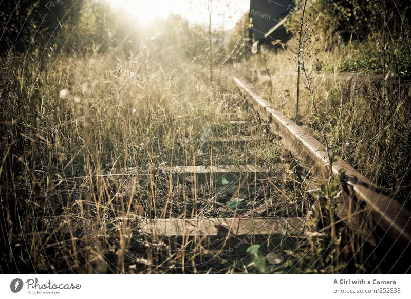 Nature Plant Autumn Environment Landscape Grass Transport Natural Wild Bushes Illuminate Logistics Travel photography Railroad tracks Traffic infrastructure