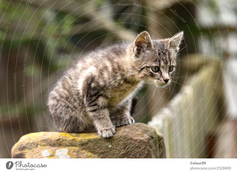 cat baby Baby Nature Animal Pelt Pet 1 Baby animal Crouch Curiosity Gray Cat Kitten Mammal won Domestic cat Colour photo Exterior shot Day Animal portrait