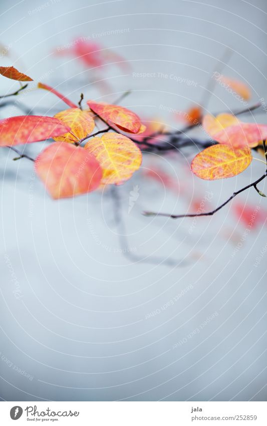 Nature Blue Plant Beautiful Red Leaf Environment Yellow Autumn Elegant Esthetic Branch Wild plant Twigs and branches
